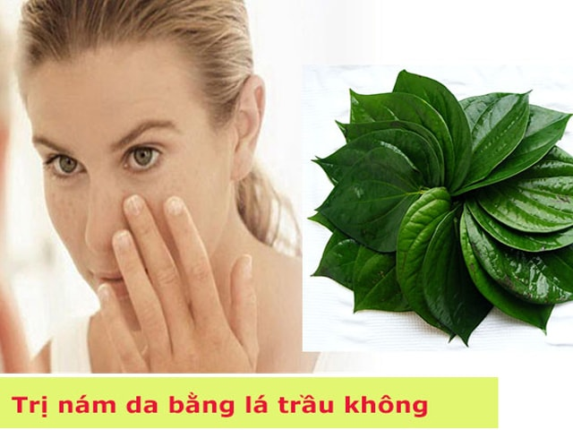 tri-nam-bang-la-trau-khong-