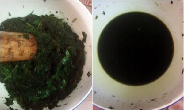 cách trị mụn trứng cá bằng lá tía tô